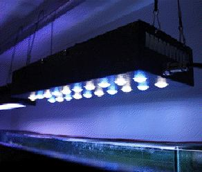 Stark LED, EShine LED Lighting over Aquarium, 60 watt