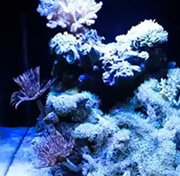 Reef Aquarium with best LED light
