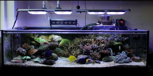 Reef Aquarium with Aquaray Aquabeam NP 1500 & 2000