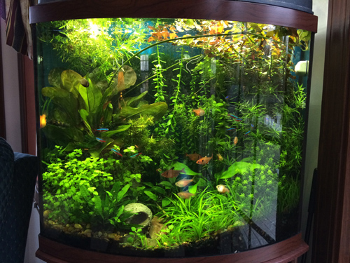 Planted aquarium with LED Lights, Fluidized Sand Bed Filter