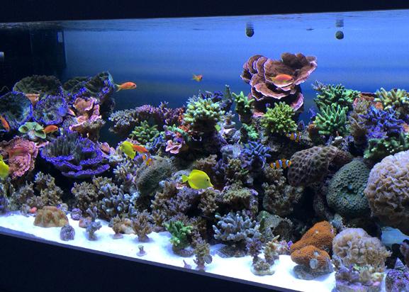 Aquarium lighting my aquarium opinions acropora reef aquarium running aquaray aquabeam led lights lighting aloadofball Image collections