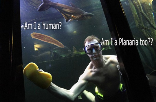 Planaria or person in aquarium